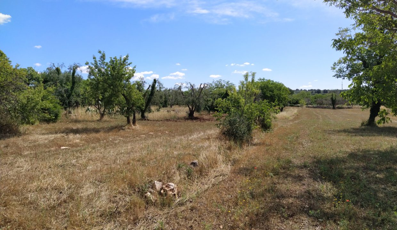 0224 trullo da ristrutturare e ampliare contrada frutto pisciacalze zona residenziale ceglie messapica (46)