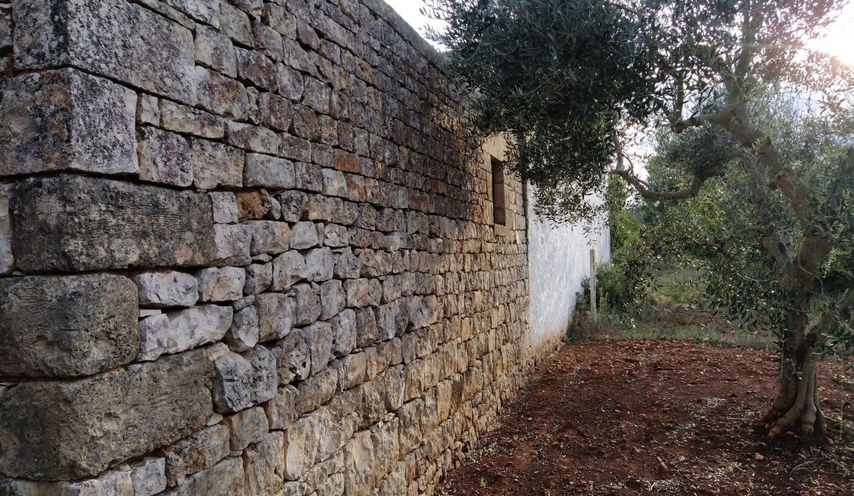 0193 antico casolare con trullo da ristrutturare ampliare in vendita a ceglie messapica (45)