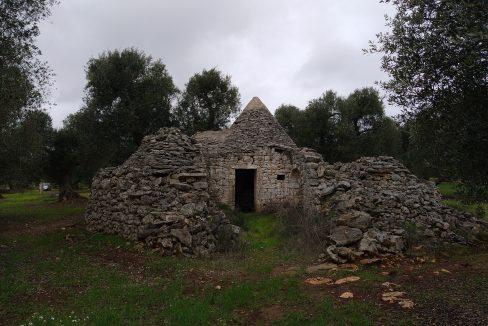 0393 trulli da ristrutturare due corpi di trulli in un terreno olivato di due ettari (21)