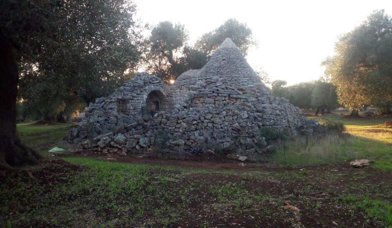 0393 trulli da ristrutturare due corpi di trulli in un terreno olivato di due ettari (28)