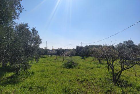 0407 trullo saraceno con lamia in vendita a ostuni terreno edificabile panoramico (5)
