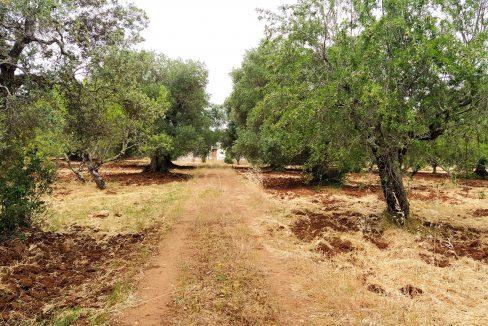 0462 trulli lamie e casali da ristrutturare e ampliare a ostuni terreni edificabili in vendita (1)
