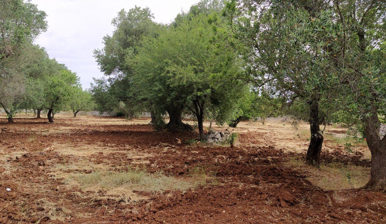 0462 trulli lamie e casali da ristrutturare e ampliare a ostuni terreni edificabili in vendita (15)